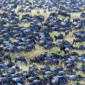 3 Days Wildebeest Tracking Safari Tour