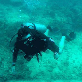 Sapi Island Discover Scuba Diving Tour