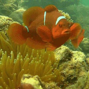 Moonbay Discovery Scuba Diving & Fireflies 1 Day Tour