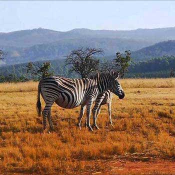 Kruger Park - Swaziland - Zululand - Durban Tour