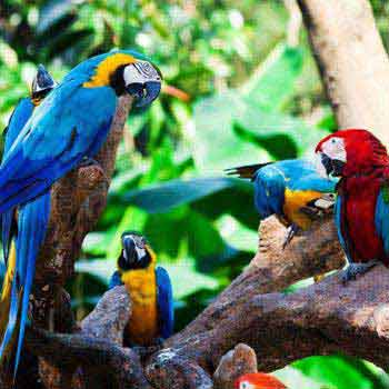Wildlife Of Amazon Colombia & Tayrona Park Tour
