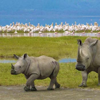 Tarangire - Ngorongoro - Serengeti Safari Tour