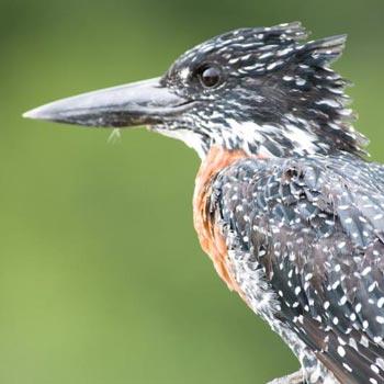 Botswana Birding Safari Tour