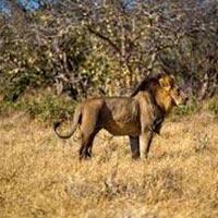 4 Countries: Kenya - Vic Falls - Botswana - Zanzibar Tour