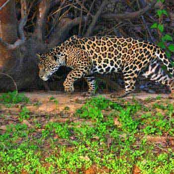 Iguassu Pantanal Wetlands - Rio De Janeiro Tour