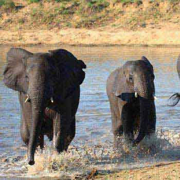 Kruger National Park In Depth - Privately Guided Tour