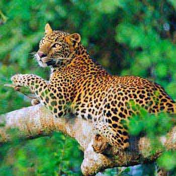 Sri Lanka Wildlife & Culture - Pasikuda Beach Tour