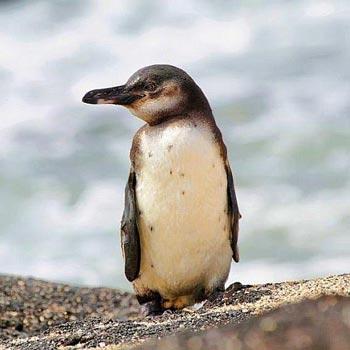 Peru & Galapagos Cruise Tour