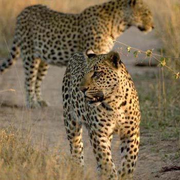3 Countries: Zimbabwe - Botswana - Zambia Tour