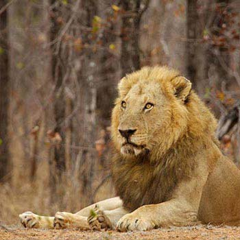 Zimbabwe: Vic Falls - Hwange Safari  Lake Kariba Tour
