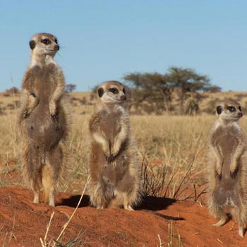 Luxury Flying Safari: Tswalu Kalahari - Cape Town Tour