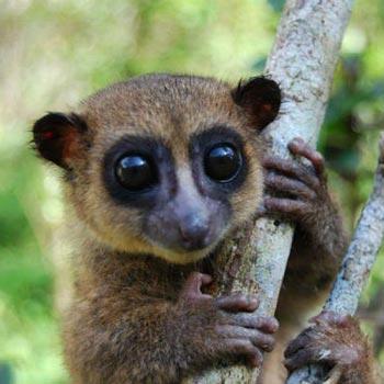 Vanilla Islands: Madagascar - Mauritius Tour