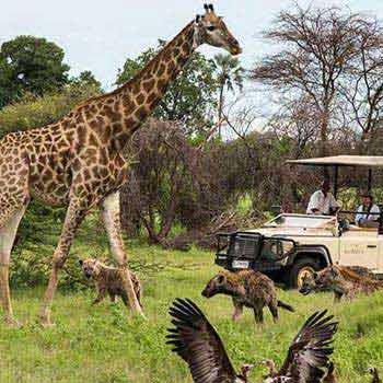 Victoria Falls Marathon - Botswana Safari Tour
