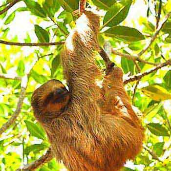 Roatan Monkey & Sloth Sanctuary Hangout Tour