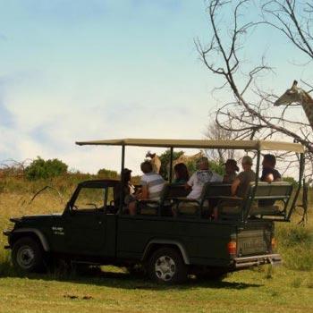 Garden Route & Wildlife Tour