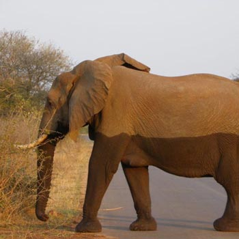 Garden Route & Big 5 Kruger Park Safari Tour Guided Tour