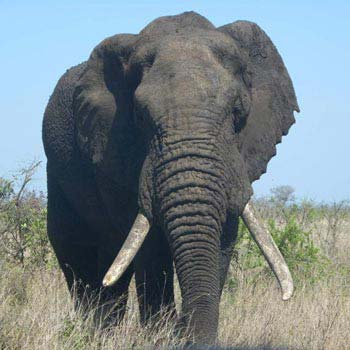 Big 5 Kruger Park Safari & Panoramic Tour