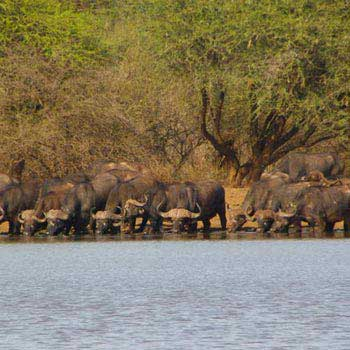 Big 5 Kruger Park Safari, Garden Route And Cape Town Tour Guided