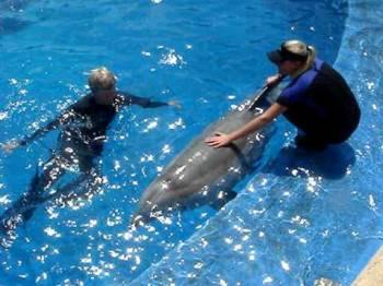 Goa Dolphin Ride Trip Tour