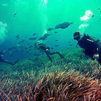 Eco Adventure and Snorkeling Tour