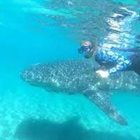 Reef Snorkeling & Cenote Swim Tour
