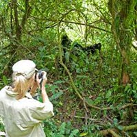 19 Days Uganda Safari Holidays Tour