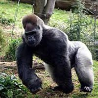 14 Day Gorillas And Wildlife Tour