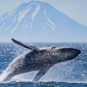 Cruise Kuril Islands & Kamchatka Package