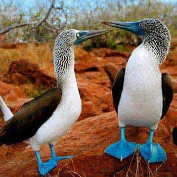 Ecuador Featuring Galapagos Islands Tour