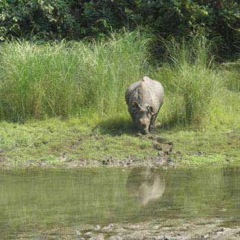 CHITWAN TOUR  PACKAGE