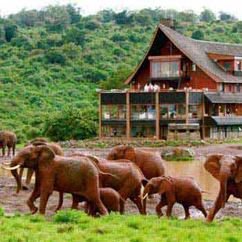 Masai Mara and Diani Beach Package