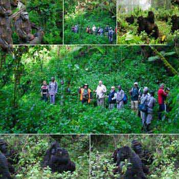Gorillas & Great Migration Package