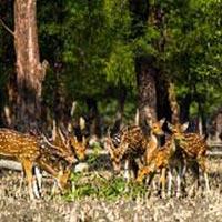 Dhaka- Khulna-Sundarban-Khulna-Dhaka Package