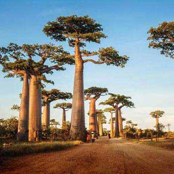 Baobabs And Tsingys Tour