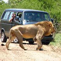 Iconic Africa Safari Tour