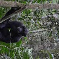 15 Day Gorilla Safaris & Wildlife to Uganda Tour