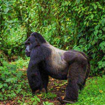 9 Day Rwanda Holiday Safari Tour