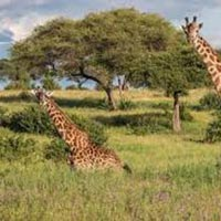 Tanzania-5 Days Experience Tour