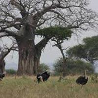 3 Days Adventurous Tanzania Trip Tour