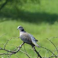 Discover Tarangire National Park and Ngorongoro Crater Tour