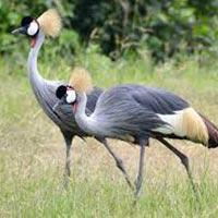 12 Days Safari to Uganda & Rwanda Tour