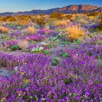 Wonderful Western Wildflowers Tour