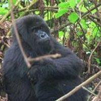 Kigali to Dar Es Salaam Overland Tours
