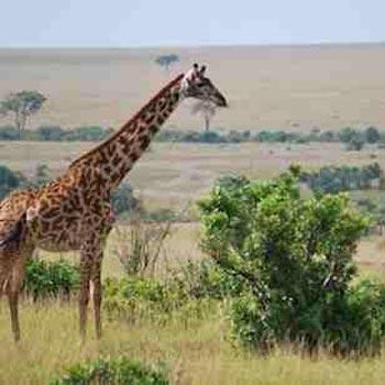 Nairobi to Dar Es Salaam Overland Tours