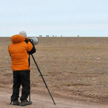 The Great Qinghai Wildlife Safari Tour