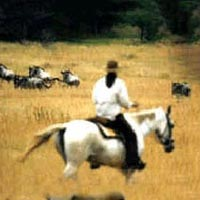 Horse-Back Riding Package