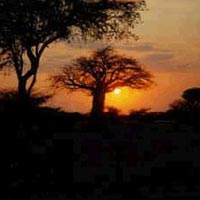 Night Game Drive Package