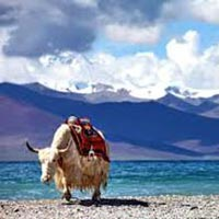 6 Days Holy City Group Tour with Namtso Lake