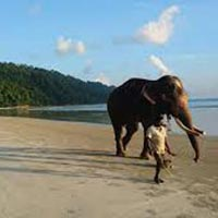 Port Blair, Havelock With Neil Island Tour