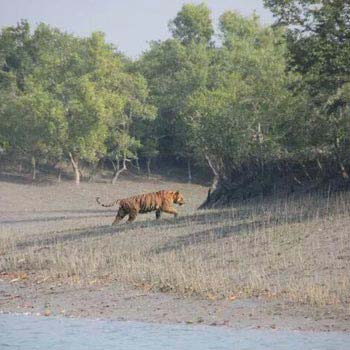 Kolkata, Sundarban Tour With Gangasagar